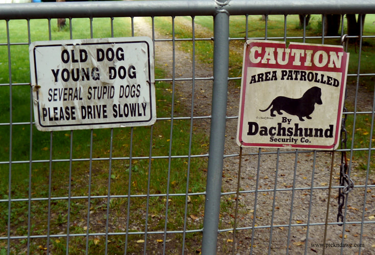 Old Dog Young Dog sign pickndawg